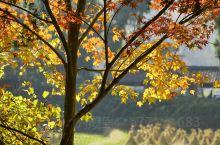 秋季景色优美,色彩斑斓的树叶,煞是好看!