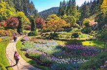 【景点攻略】布查德花园。世界上最美的花园没有之一,据说到加拿大维多利亚不到布查德花园等于白来 详细地