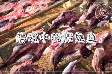 传说中的魔鬼鱼长什么样?海洋学家把蝠鲼叫魔鬼鱼,在嵊泗渔民眼里这个才是,长相奇丑,肉质像鸡肉,数量多