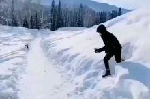 《班超出塞》新疆喀纳斯禾木:只有这里的冬天玩雪才了叫尽兴