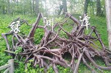 绿渊潭位于吉林省长白山国家自然保护区,因岳桦阴翳、潭水碧绿深窘而得名。绿渊潭瀑布飞流直下,最高落差达