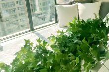宝鸡民宿【红豆树下】  阳光下懒懒地喝茶, 静静地看书, 或者, 和好朋友畅快谈心, 与心上人默默相
