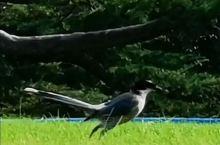 《来自阳春的问候:这到底是什么鸟……》  我是孤独浪子,希望我的拍拍让您有所收获。 漫游神州31载,