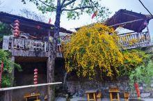 椿树沟,以多椿树而得名。 这个望海楼深处的小山村,只有仅仅16户人54口人,祖祖辈辈生活在这里。《舌