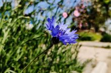 """家乡的春天        """"一年之计在于春,一日之计在于晨。""""的确是这样,春天是播种的季节,也是一个"""