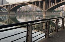 沱江坐船,一元钱一个人过江,几分钟就过江了,太快了。早上有很多人在沱江里游泳。沱江边上有个古镇,过江