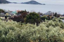 小豆岛上的橄榄纪念公园,日本开始种植橄榄从小豆岛开始,并且在1989年和希腊的米洛斯岛结为友好姐妹城
