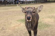 鹿好多好可爱呀!