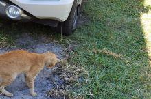 猫蛇大战,第一次看见真实现场版的,灰常刺激