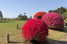 偕乐园之一: 茨城县水户市的偕乐园是日本三大名园之一,始建于天保13年-1842年,是在千波湖畔的七