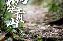 """高黎贡山——挂在眼前的绿色屏障  最美理由          高黎贡山有着最丰富令人读赏不尽的为""""人"""