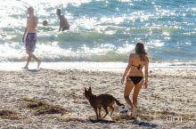 在南澳阿德莱德格雷内尔的海滩上,只想做一件事,那就是发呆!秋季的海风轻抚,阳光温热,所有人都懒散地呆