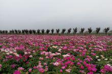 花儿朵朵竞相开放
