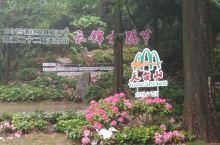 云锦杜鹃,因天气原因开得一般,下次再来。这里的花与毕节、麻城、镇江南山的杜鹃相比各有特点。