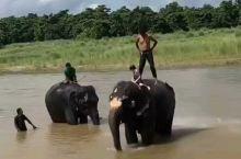 奇特旺国家森林公园 在丛林里穿梭 身临其境观看 大象洗澡  想来尼泊尔的盆友 记得过来好我哦