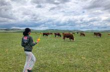 多伦草原……牛儿悠闲地吃草,民风淳朴……草原上可以随便溜达,没人上来乱收费