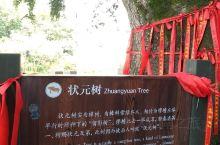 【状元及第】种下一棵树的决心,进京赶考,一举高中!打卡西浦状元村#旅行#