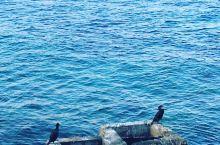 我真是太爱马略卡岛了,虽然去马略卡并不方便,要乘坐一次内陆飞机,但是我告诉你,这是值得的。当年,钢琴