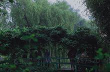 莫奈花园下过一场雨。  植物和雨声都好治愈,是时候换一种心情。 (这些花草,也送给你。 