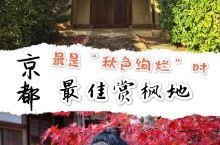日本京都 | 最佳赏枫地,最是秋色绚烂时  如果让我只推荐一个京都 的赏枫寺庙,那一定是常寂光寺