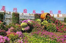 喜迎国庆,逛园博苑,看市花三角梅展 为庆祝中华人民共和国成立70周年,国庆期间,厦门园博苑举办''艺