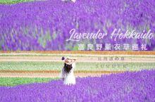 北海道旅行|最全富良野薰衣草攻略 避开人潮日の出公園 日之出是日本第一个拥有大型薰衣草花田的公共花园