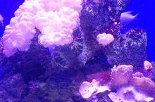 抚顺海洋馆里的珊瑚可漂亮了,让人流连忘返,让人喜欢