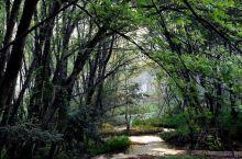 #黄山#透过垂落的藤蔓的木格窗,六点半钟的枫杨林间仿佛有着稀薄的水汽,丰乐溪安静流趟,目光随着简易的