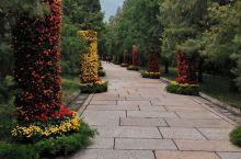 十月香山,虽然枫叶未红,但景色已征服了游人,流连忘返,古树苍天!