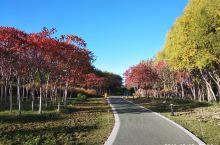 张掖植物园