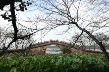 金桂飘香鼋头褚—看太湖一般都会去无锡,而鼋头褚无疑是最佳观景处。深秋的太湖边,金桂飘香,游人比旺季时