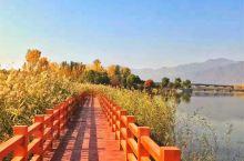 秋天的妫河森林公园美得像油画,河边芦苇荡漾,鸥鸟翩飞;林荫小路两旁遍植彩叶林,草坪上落满金黄叶子,阳