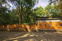 隋梅还没开,落叶还没黄,青苔已过去,但国清寺依然是那个静谧悠远到可以走很久的地方。1400多年,树尤