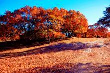 乌丹塔拉最美的枫叶公园