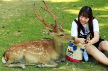 我和小鹿君