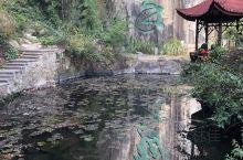 天然氧吧…… 莫干山景区