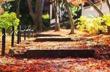 落叶铺满路