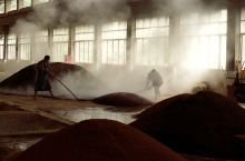 茅台镇某小型酒厂,糙沙工序。  从工艺来说,茅台酒厂也是一样的。不同的是更规范,给了多倍的工资,雇的