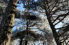 今天太阳终于露脸了,阳光下,树上的冰凌开始纷纷融化落下,滴滴答答的声音。有种大地复苏的感觉