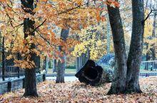 深秋的十月,芬兰的赫尔辛基已经冷了,叶子开始多彩起来!微黄、亮红、深绿~~尤其在雨后,阳光穿过清冷将