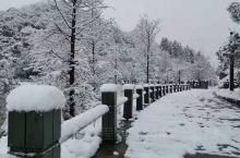 下雪了 ,这里越来越难得见到雪景。