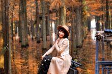 秋天童话,梦里水乡 位于湖北仙桃市的梦里水乡,原来是一片林场,开发改造后,成为武汉周边一片很好的露营
