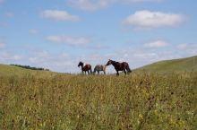 乌兰布统草原,红山军马场,马儿是主角。几乎处处可见马群,有的在围栏内休息,有的悠闲地吃草。看着这些马