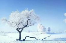 冬天的乌兰布统坝上草原,银装素裹,散发出动人的魅力。