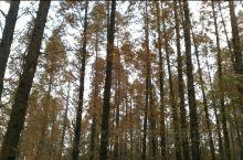 同里湿地公园,春有繁花,夏有浓荫,秋看黄叶,冬品萧索。在冬日的暖阳下,高大的水杉透出斑驳的树影。最难
