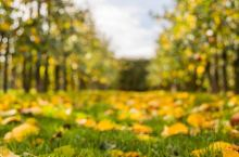 瑞典斯科纳省的苹果非常有名,这几天我们已经喝过各种好喝的苹果汁了,而今天我们要去探访当地著名的苹果园