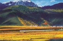 香格里拉の四季歌——夏天  七八月的香格里拉是一年当中最灿烂的季节,此时的鲜花不再像春天一样,处处
