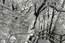 冬天下雪后的老君山更加的漂亮,放佛仙境一般。