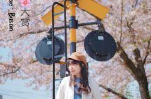春天就要看樱花呀釜山镇海樱花大赏 釜山最美的樱花不在市区,而是车程1.5小时的昌原市镇海。镇海这里的
