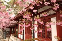 《来自朝天的诱惑:我们已经春暖花开……》  我是孤独浪子,希望我的拍拍让您有所收获。 漫游神州31载